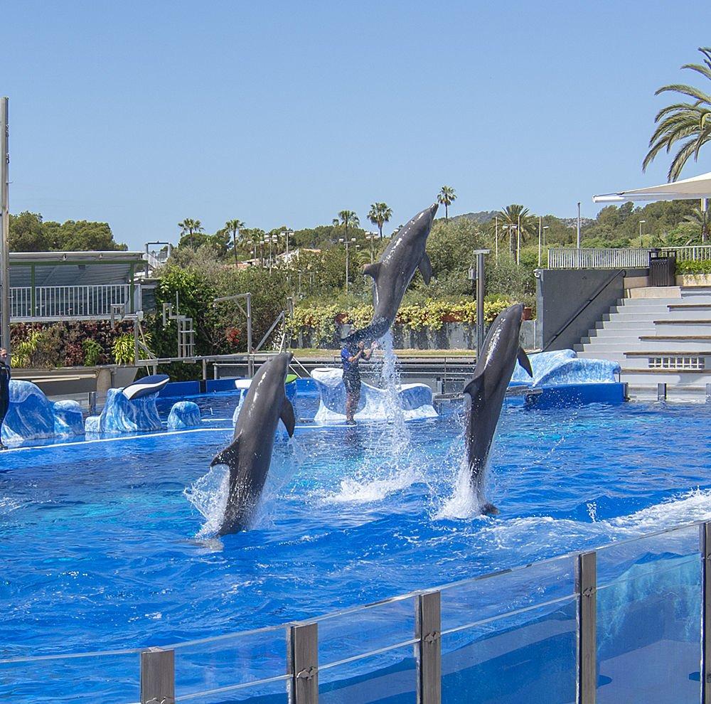 Delfine auf Mallorca