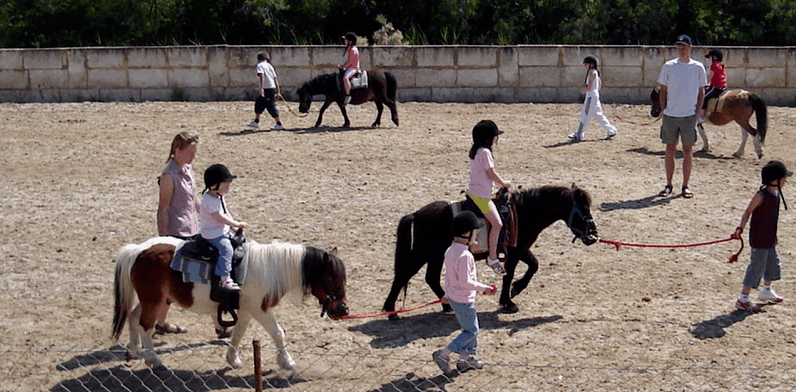 Ponies on the ranch
